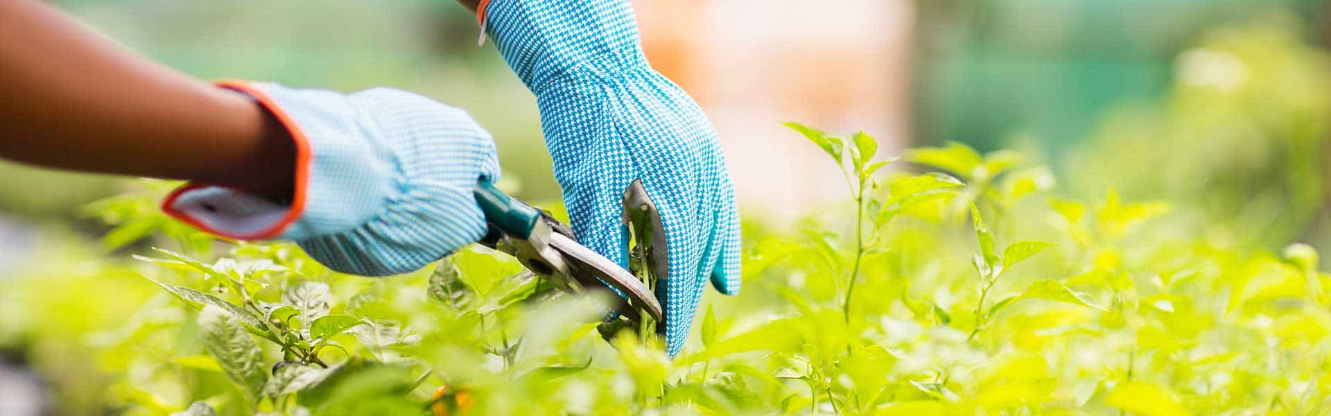 Let us transform your garden into the place you deserve!